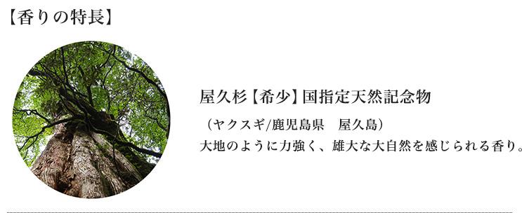 屋久杉【希少】国指定天然記念物